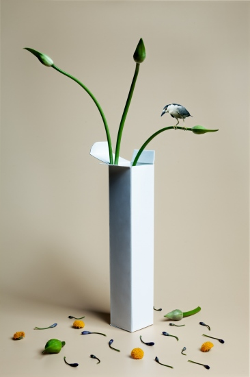 bodegon de caja blanca abierta con planta y pajaro