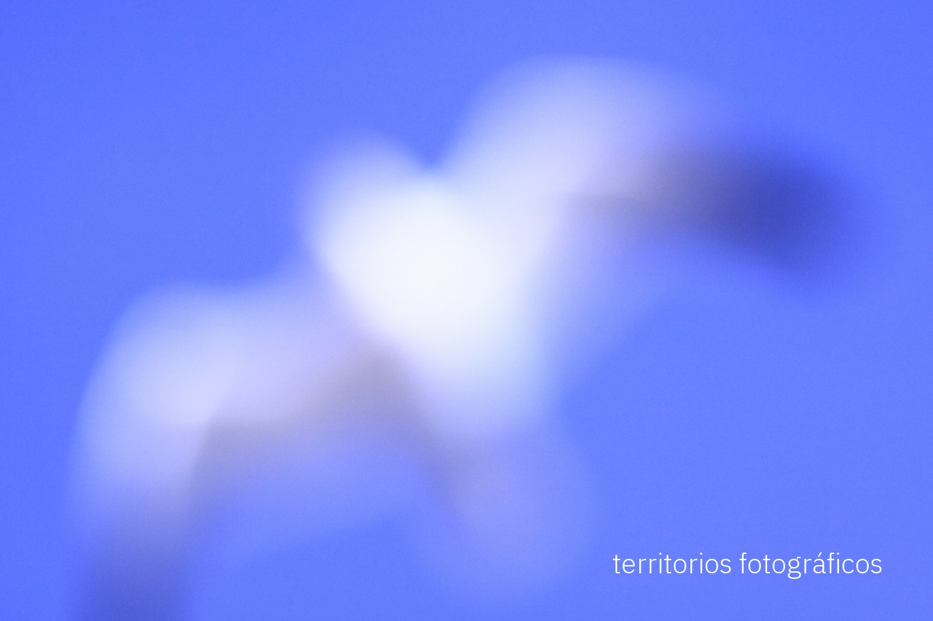 dreams - territorios fotográficos
