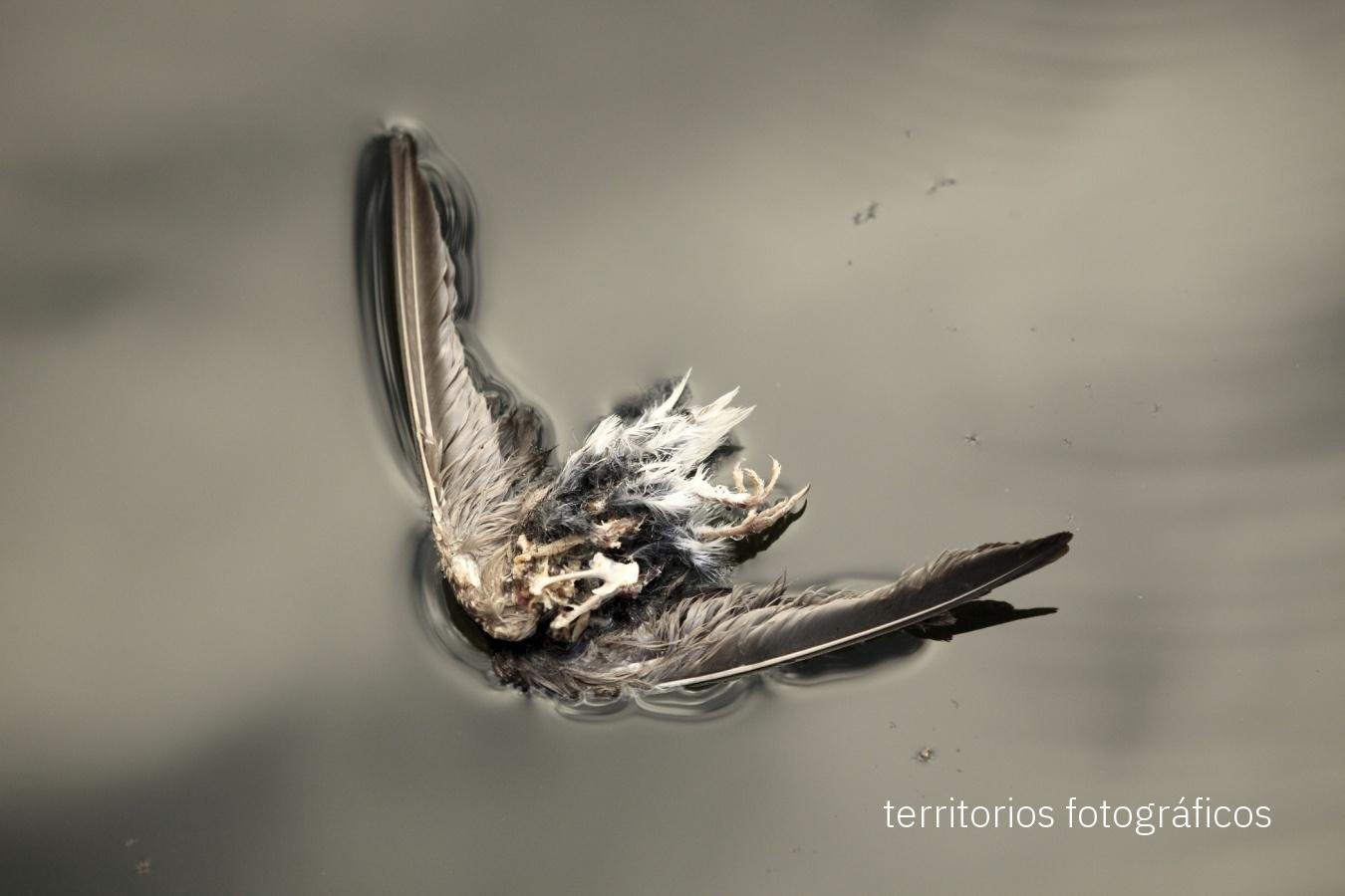 death - personal visions - territorios fotográficos
