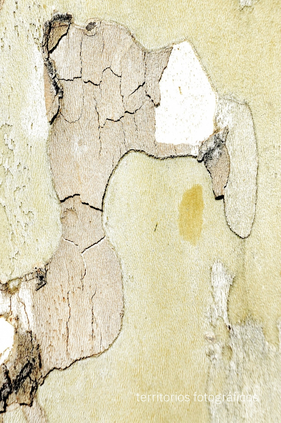 pavo - pareidolias - territorios fotográficos