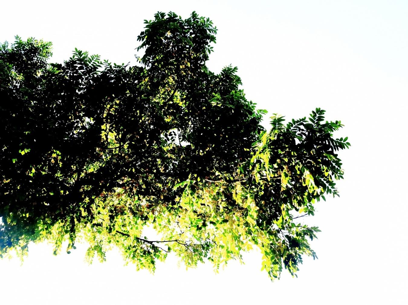 jirafa - pareidolias - territorios fotográficos