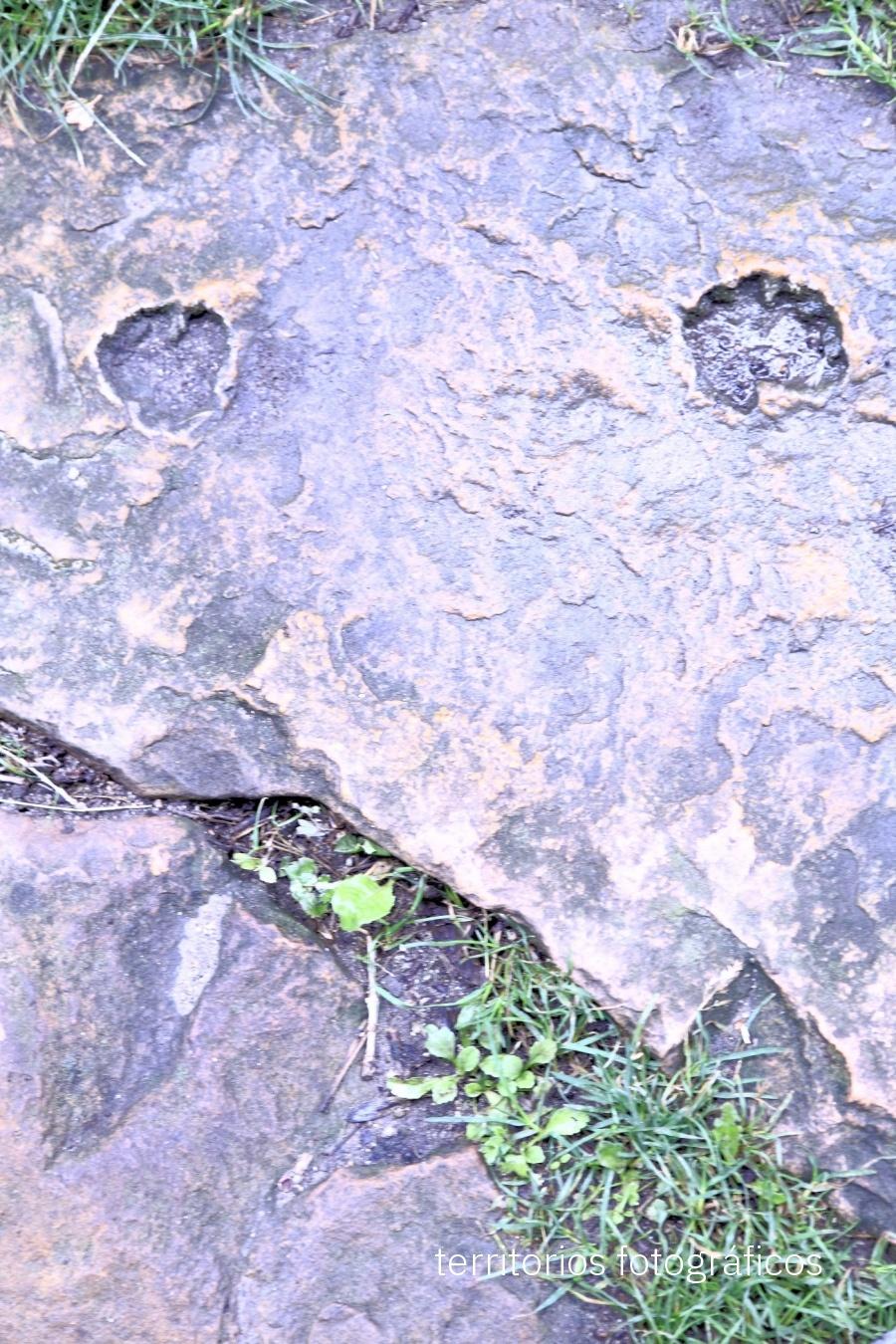 elephant - pareidolias - territorios fotográficos