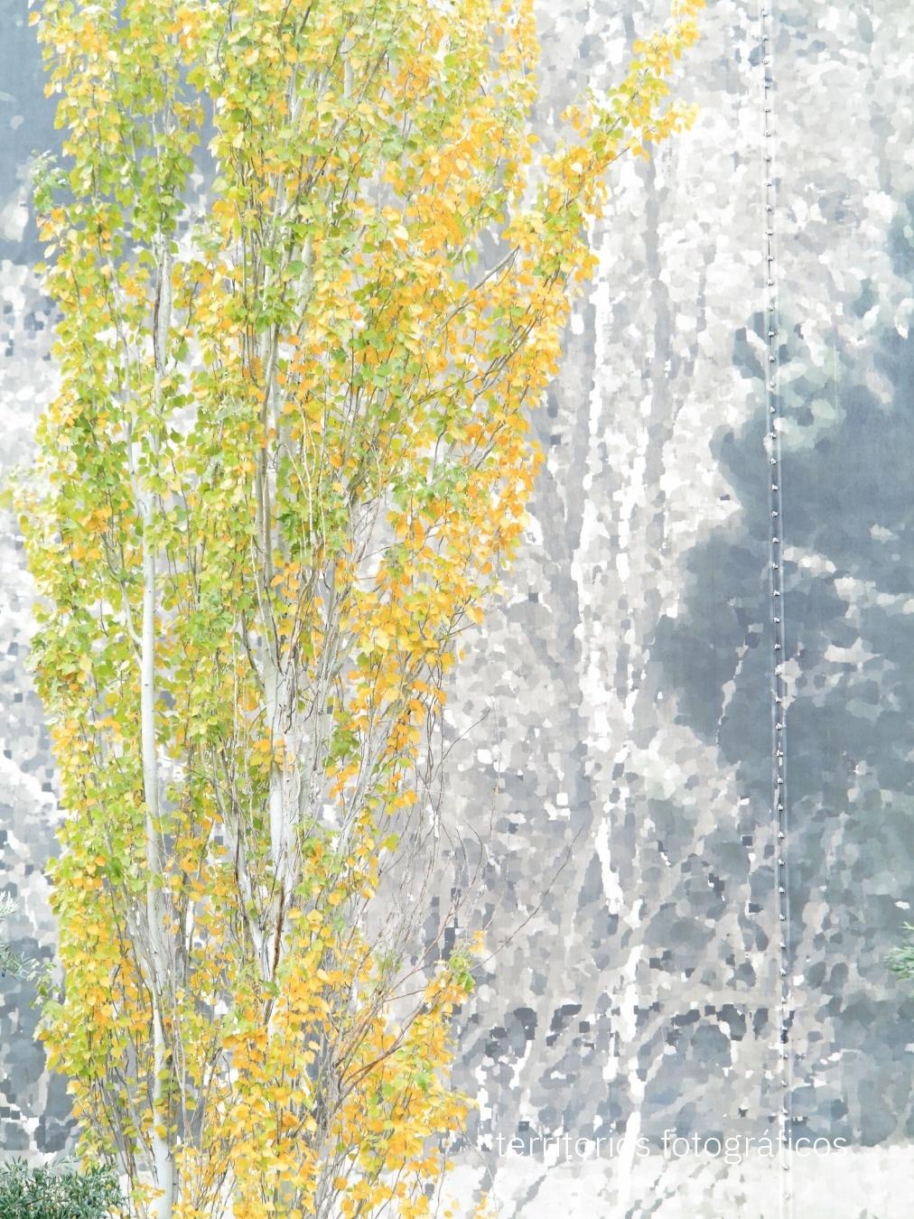 urban nature - territorios fotográficos