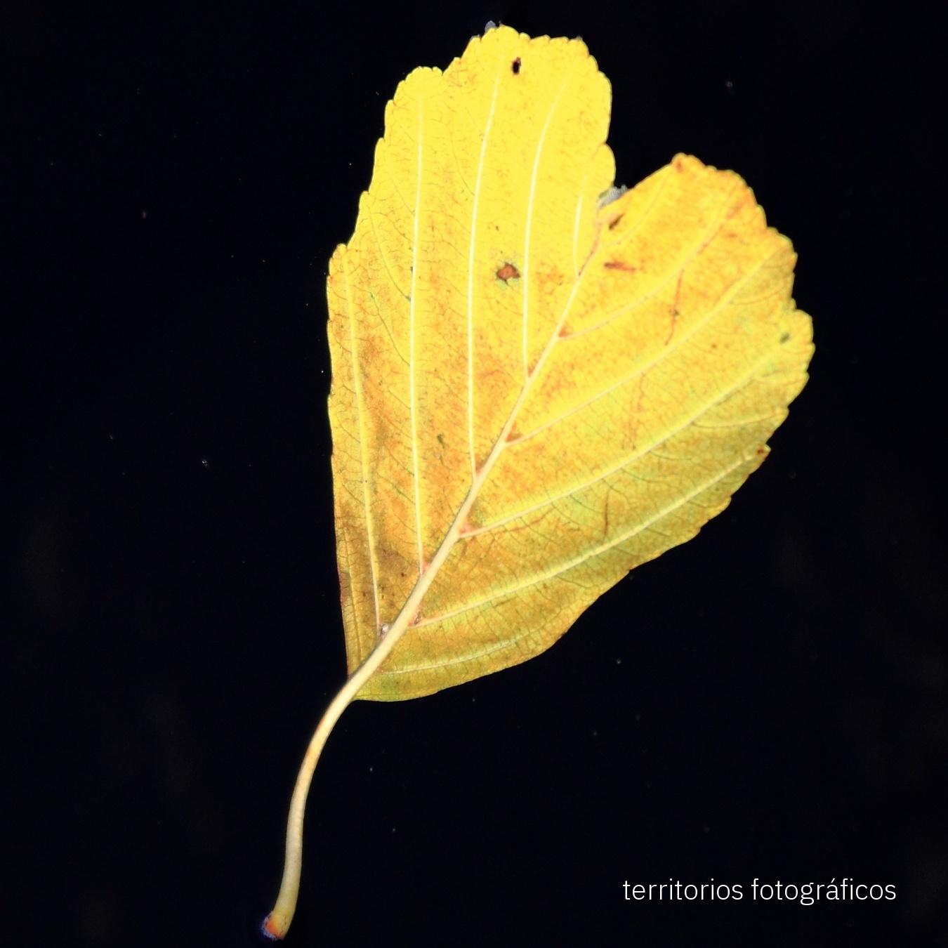 natural design - territorios fotográficos