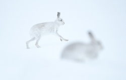BioPhoto Contest 2018 (Italy) - Highly Commended Mammals Category