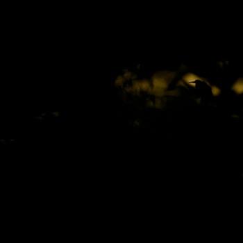 Grey heron silhouettes