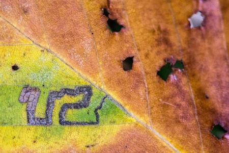 Uge Fuertes, Teruel,planta, arte,colores,metáfora visual, simbolismo, creatividad,fotografia, naturaleza,  vegetal, art, creativity, expresión, Pirineo, Huesca, hojas, bosque, hayedo, gusano, U2,