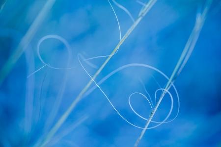 Uge Fuertes, Teruel, arte, creatividad,fotografia, Corazón, corazones efimeros, heart, metáfora visual, simbolismo, naturaleza,  vegetal, art, creativity, expresión,