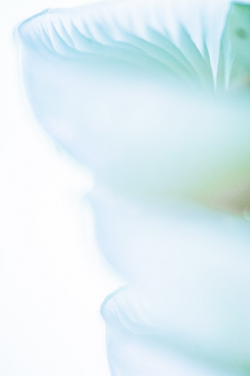 Uge Fuertes, Teruel, arte,planta, metáfora visual, simbolismo,creatividad,fotografia, naturaleza,  vegetal, art, creativity, expresión, creatividad,fotografia, natutraleza,  vegetal, art, creativity