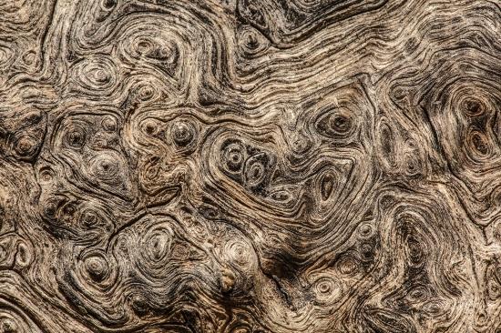 Uge Fuertes, Teruel, arte, creatividad,fotografia, metáfora visual, simbolismo, naturaleza,  vegetal, art, creativity, expresión, tronco, encina, foto aérea.
