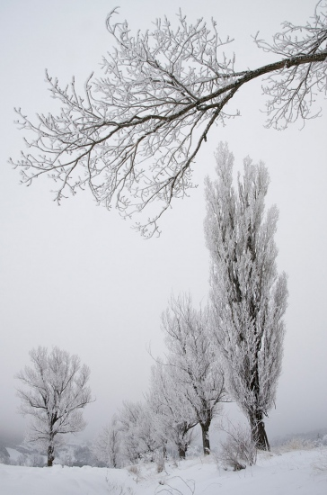 Uge Fuertes, Teruel, arte, creatividad,fotografia, metáfora visual, simbolismo, naturaleza,  vegetal, art, creativity, expresión,arboles, alma, exposición, Chopos, nieve, Bronchales, frío, blanco,