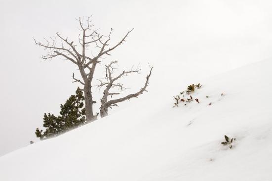 Uge Fuertes, Teruel, arte, creatividad,fotografia, metáfora visual, simbolismo, naturaleza,  vegetal, art, creativity, expresión,arboles, alma, exposición,Andorra, Pino negro, composición, nieve,