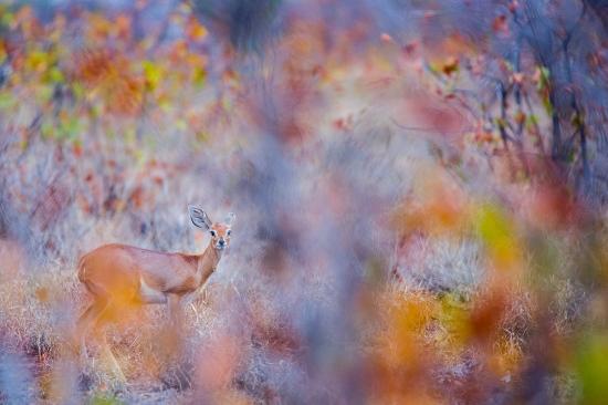 Uge Fuertes, Teruel, arte, creatividad,fotografia, metáfora visual, simbolismo, naturaleza,  vegetal, art, creativity, alma, composición, camuflaje, otoño, steembok,
