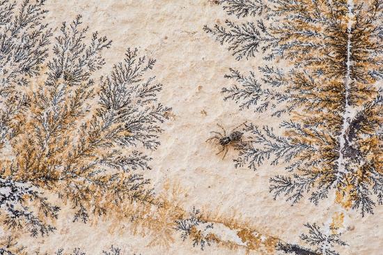 Uge Fuertes, Teruel, arte, creatividad,fotografia, metáfora visual, simbolismo, naturaleza,  vegetal, art, creativity, alma, composición, camuflaje, spider, araña, dendrita, pirolusita,
