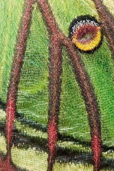 Uge Fuertes, Teruel, arte,impresionismo, creatividad,fotografia, metáfora visual, simbolismo, naturaleza, art, creativity,pintura, pint, dream, insecto,mariposa, isabelina, Actias isabellae, textura,