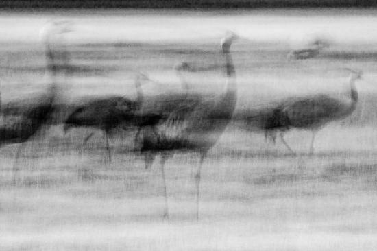 Uge Fuertes, Teruel, arte, barridos, creatividad,fotografia, metáfora visual, simbolismo, naturaleza, art, creativity, grulla, grus grus,Gallocanta,picture,