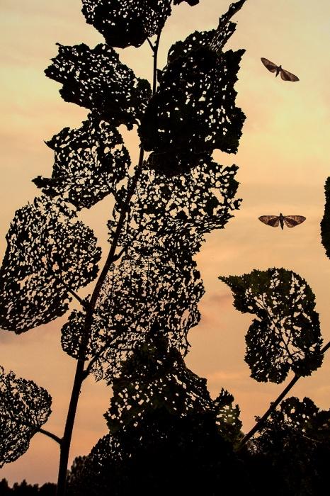 Uge Fuertes, Teruel, arte,impresionismo, creatividad,fotografia, metáfora visual, simbolismo, naturaleza, art, creativity,pintura, pint, dream, insecto,mariposas, vuelo,