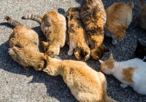Aoshima, la isla de los gatos