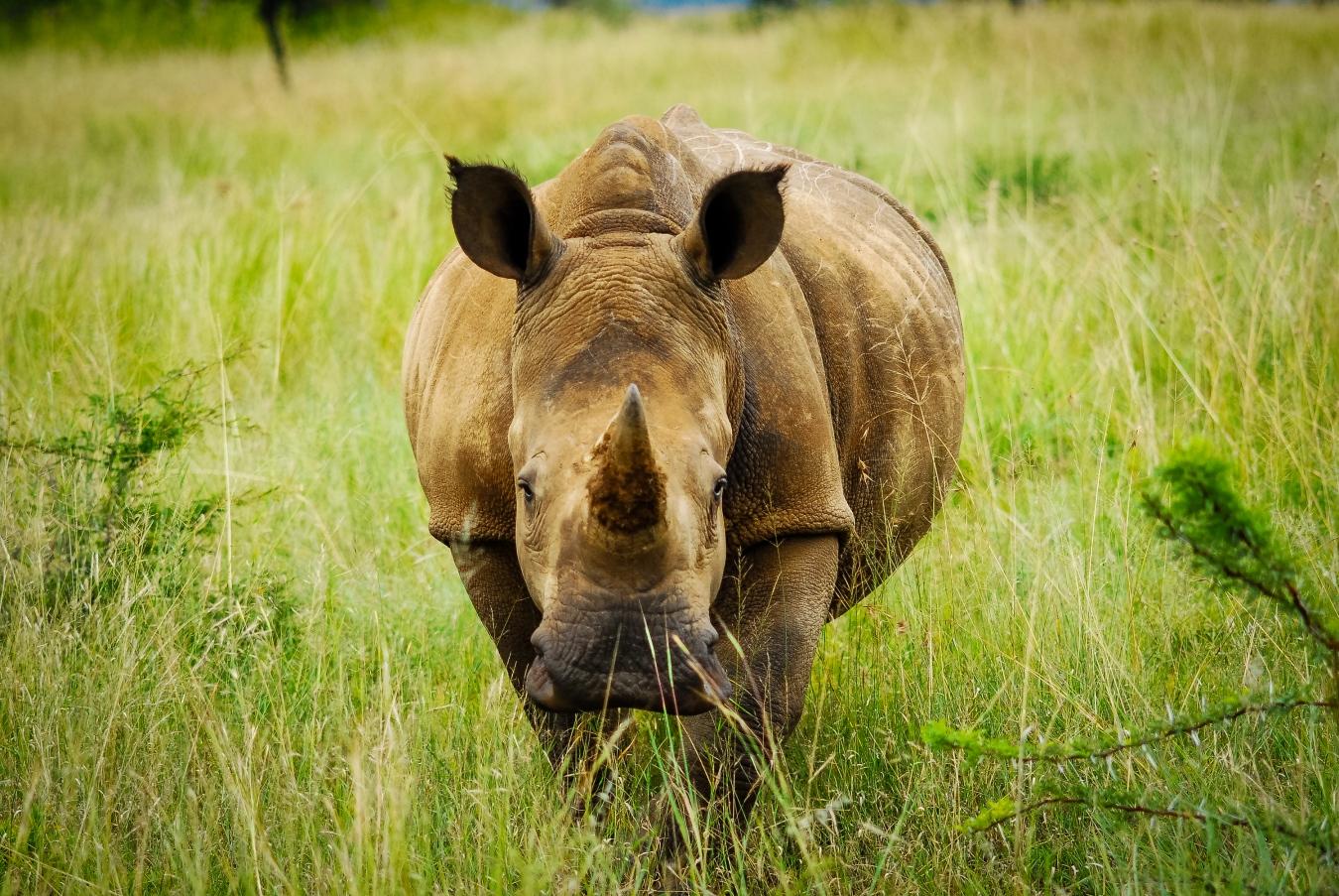 Los señores de la tierra - Wildlife Conservation Photography, UWDREAMS.COM