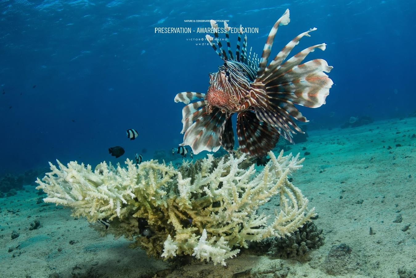 Vida en el océano - Wildlife Conservation Photography, UWDREAMS.COM