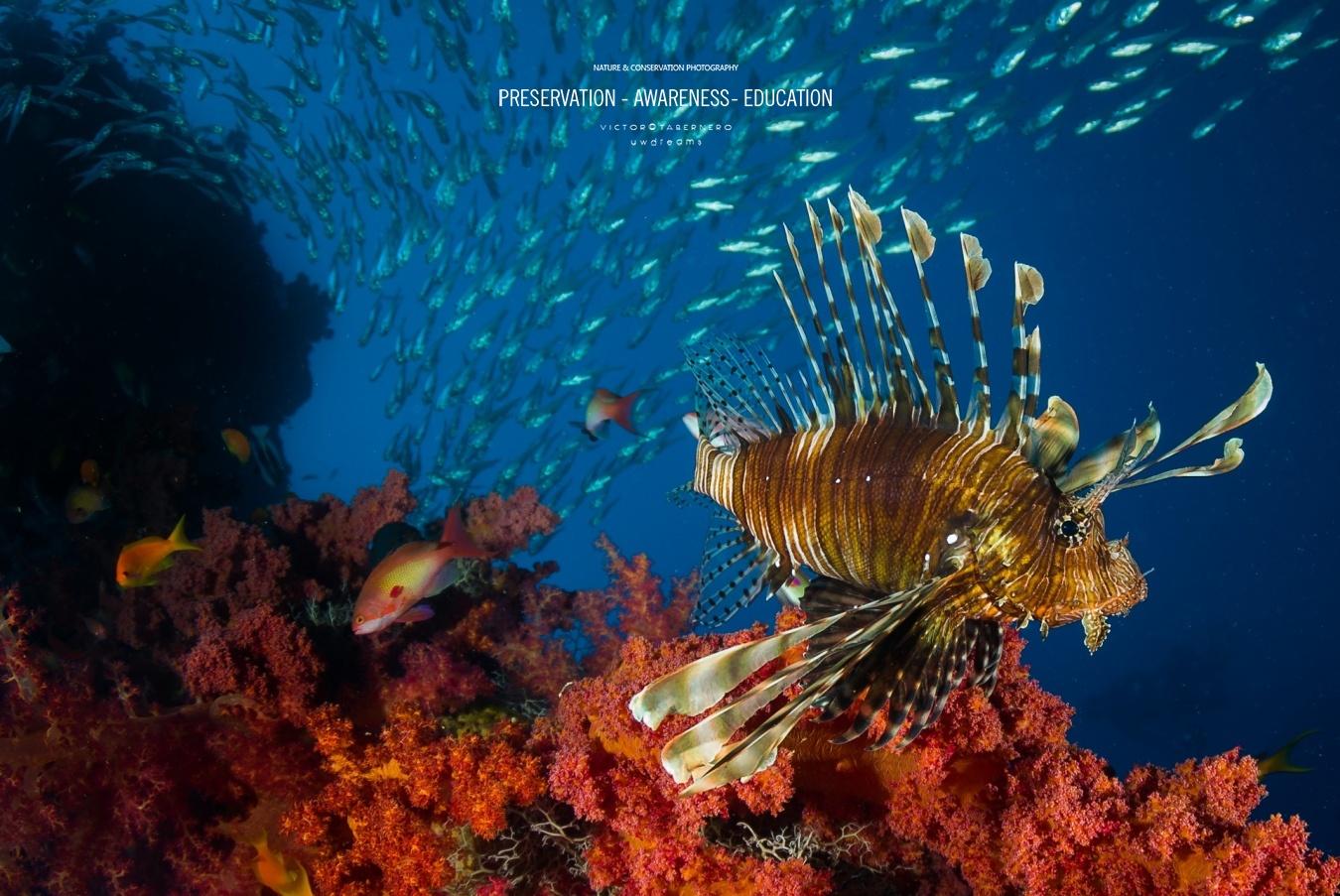 Silencios - Wildlife Conservation Photography, UWDREAMS.COM