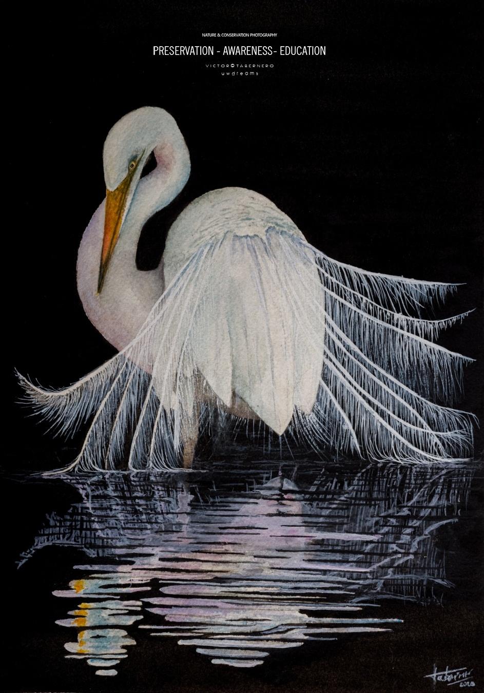 Heron - 31x23cm - Vida Salvaje - Wildlife Conservation Photography, UWDREAMS.COM