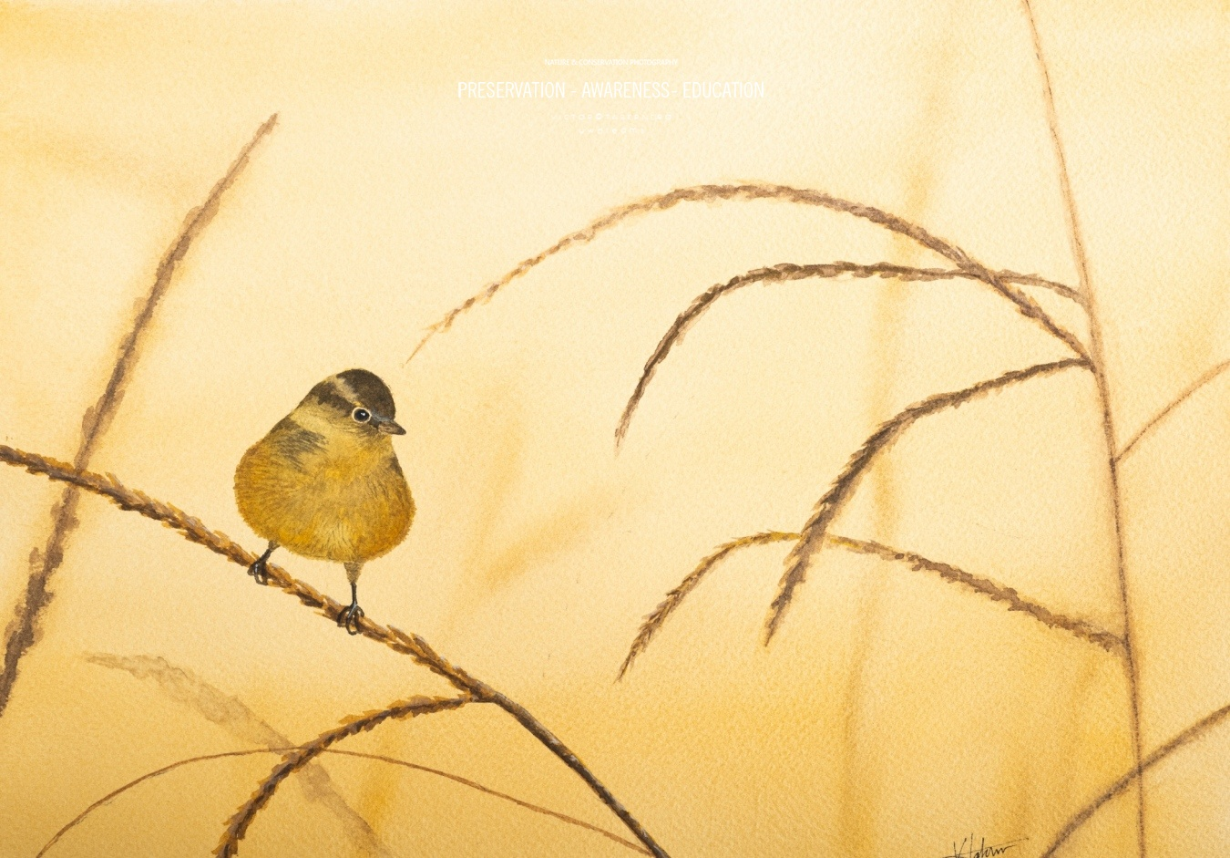 Ave al atardecer - 31x23cm - Vida Salvaje - Wildlife Conservation Photography, UWDREAMS.COM