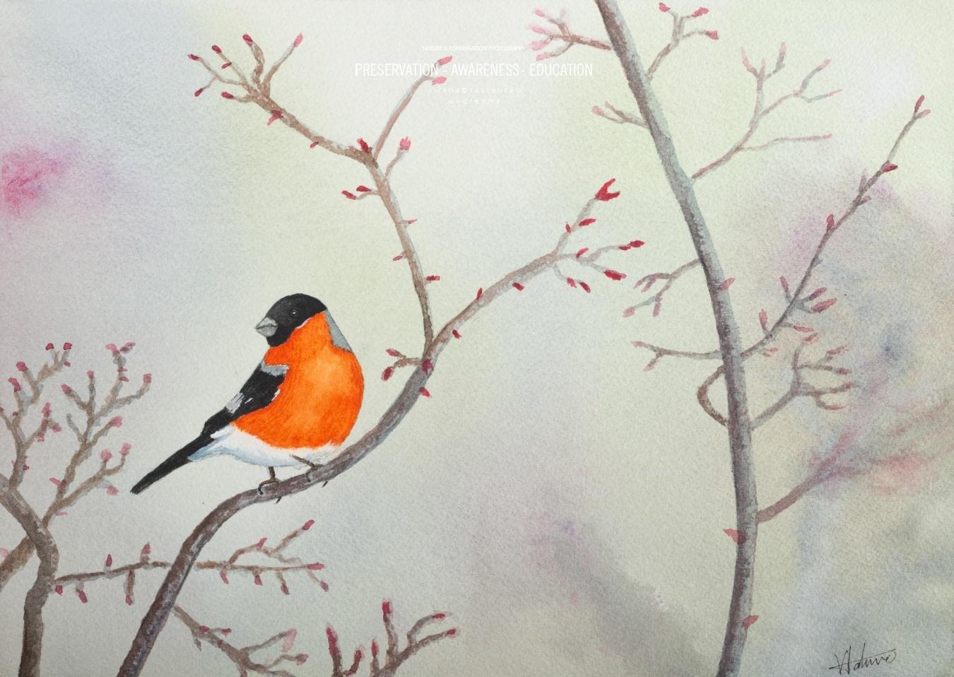 Spring 31x23cm - Vida Salvaje - Wildlife Conservation Photography, UWDREAMS.COM