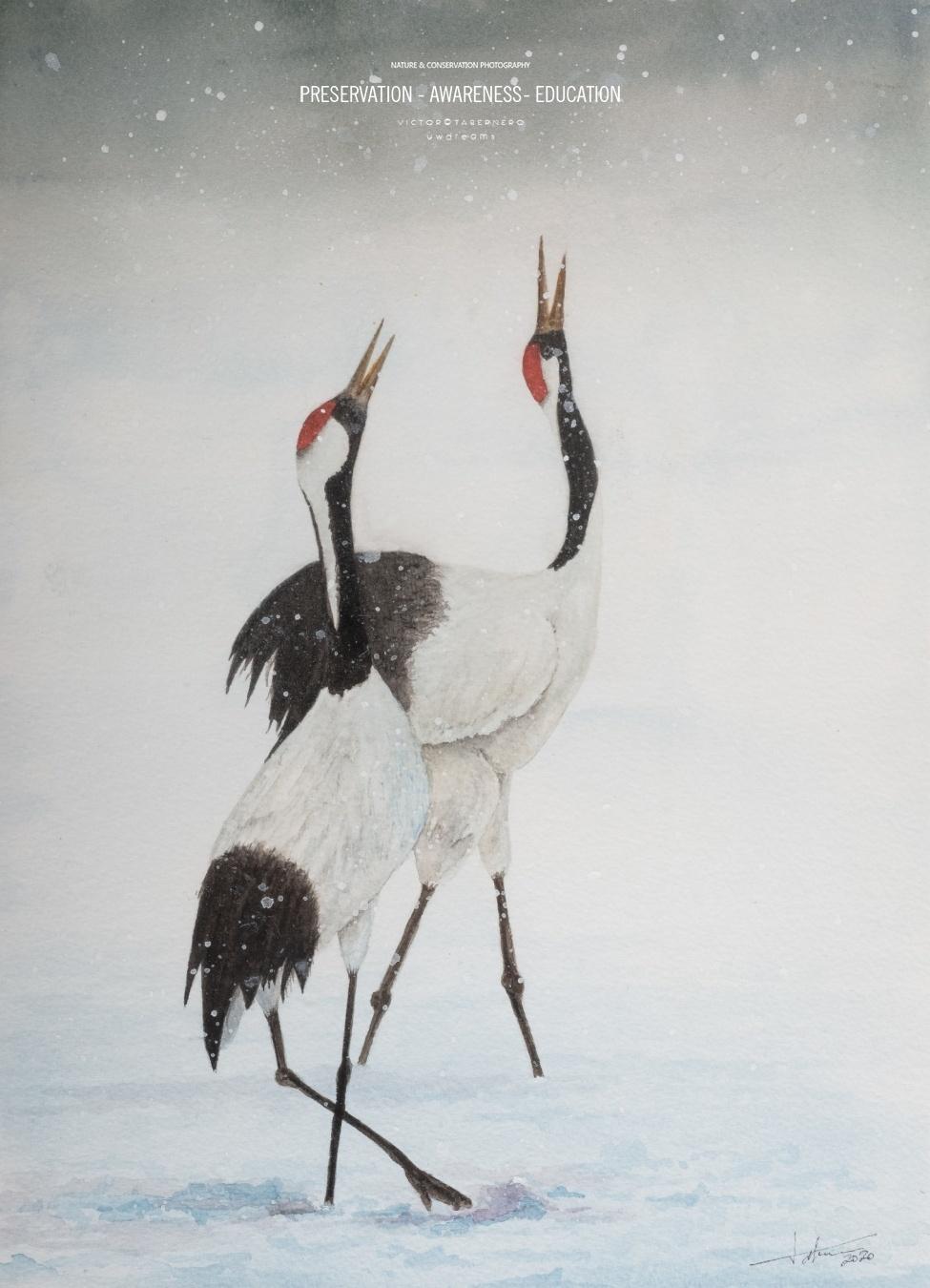 Grullas en la nieve - 41x31cm - Vida Salvaje - Wildlife Conservation Photography, UWDREAMS.COM