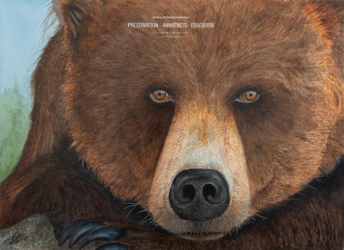Grizzly - 41x31cm - Vida Salvaje - Wildlife Conservation Photography, UWDREAMS.COM