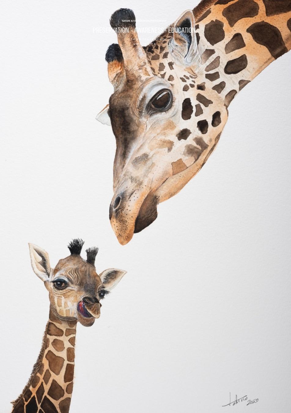 Jirafas - 31x41 - Vida Salvaje - Wildlife Conservation Photography, UWDREAMS.COM