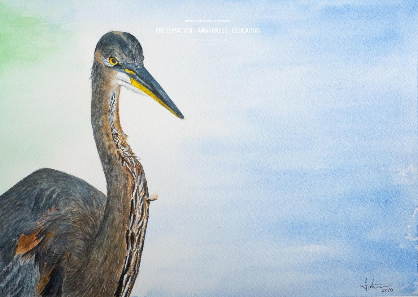 Heron - 41x31cm - Vida Salvaje - Wildlife Conservation Photography, UWDREAMS.COM