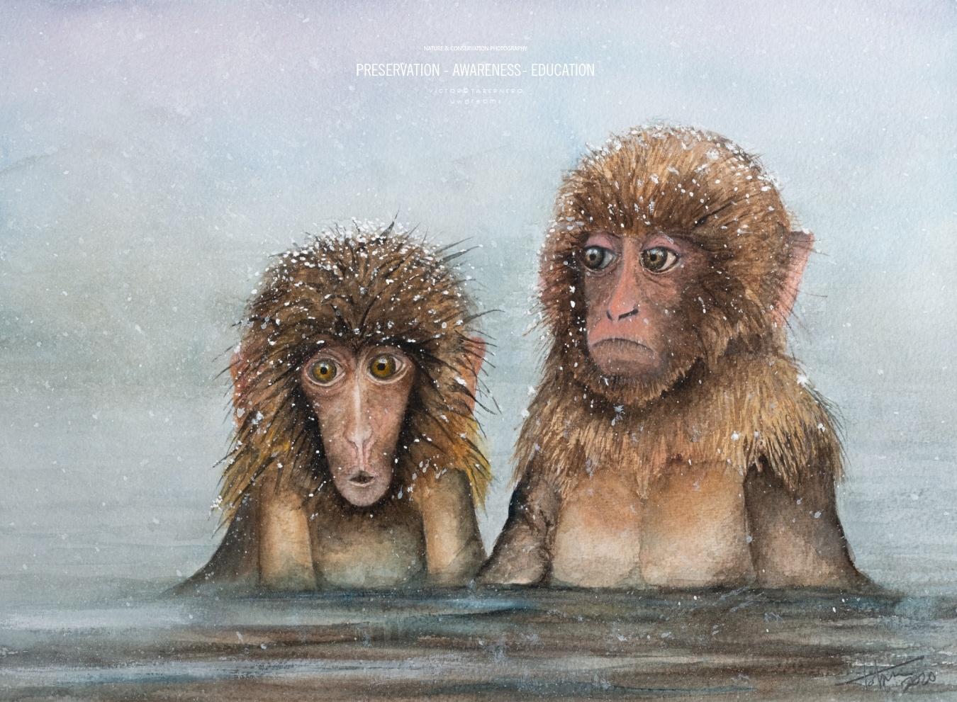 Monos japoneses - 41x31cm - Vida Salvaje - Wildlife Conservation Photography, UWDREAMS.COM