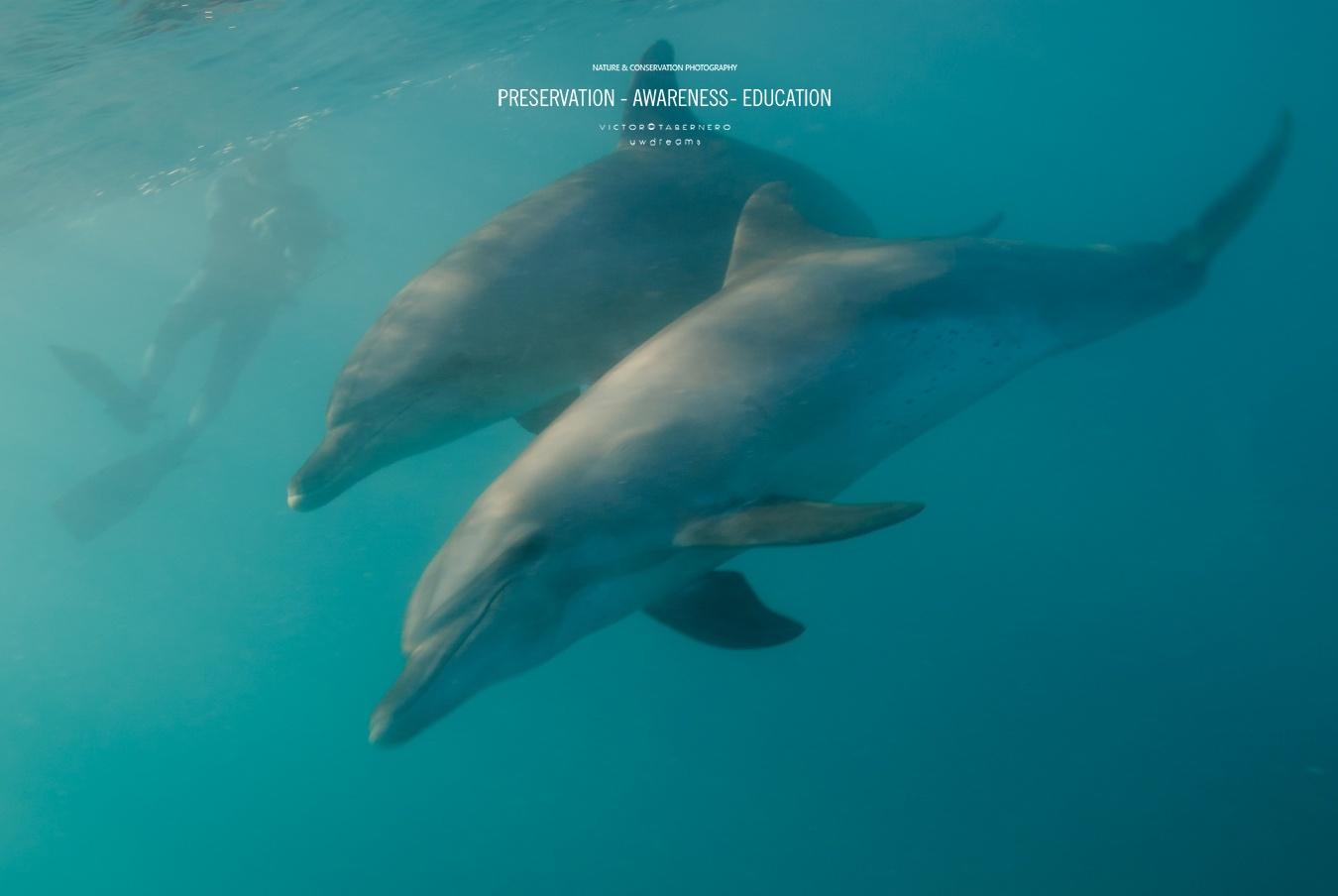 Dueños del los mares - Wildlife Conservation Photography, UWDREAMS.COM