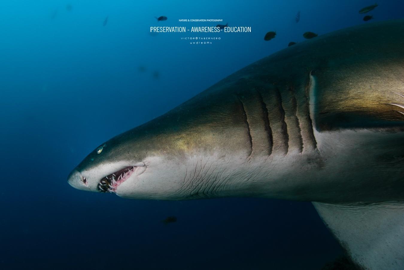 fotografía  - Dueños del los mares - Wildlife Conservation Photography, UWDREAMS.COM