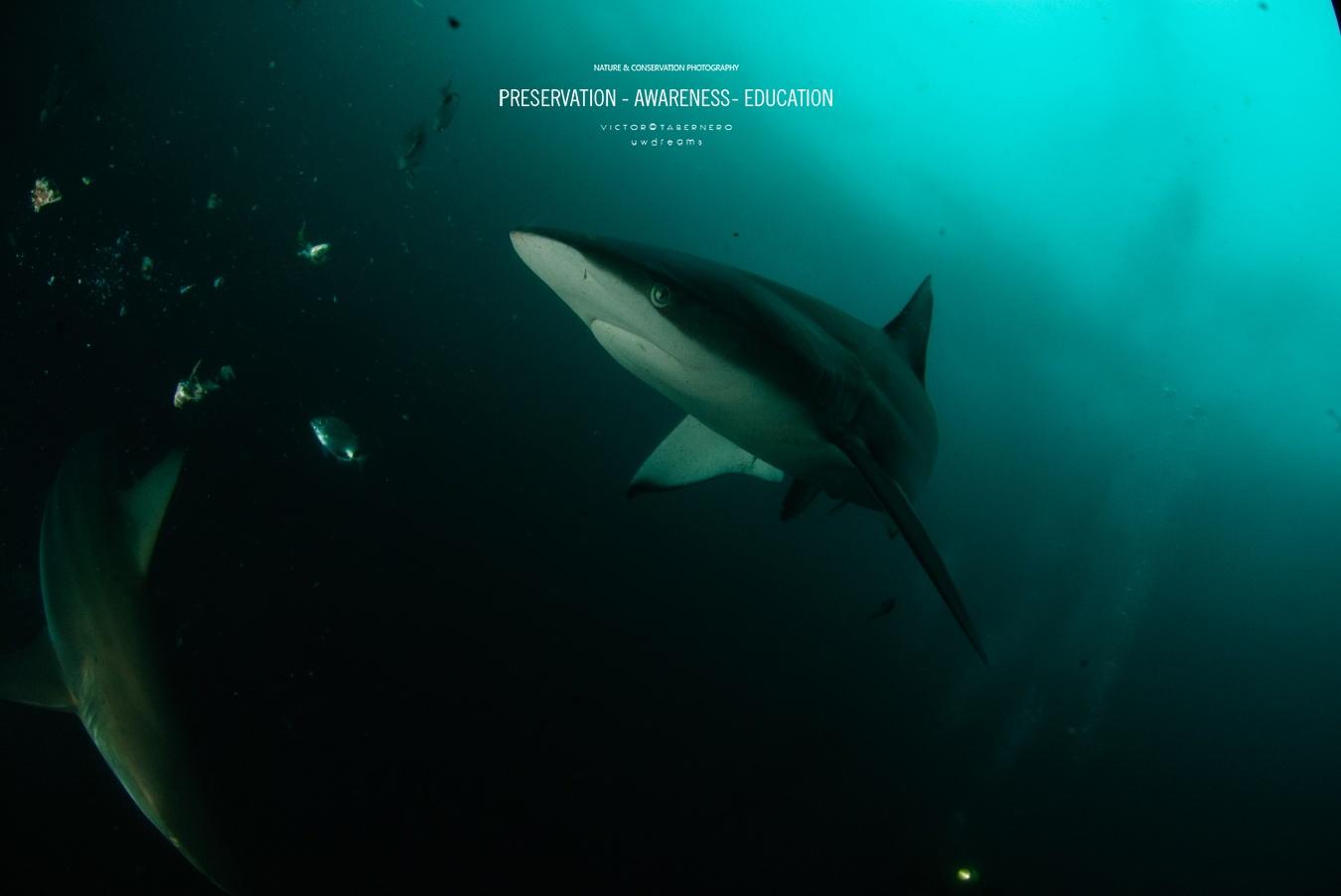 fotografía obtenida mediante cebo - Dueños del los mares - Wildlife Conservation Photography, UWDREAMS.COM