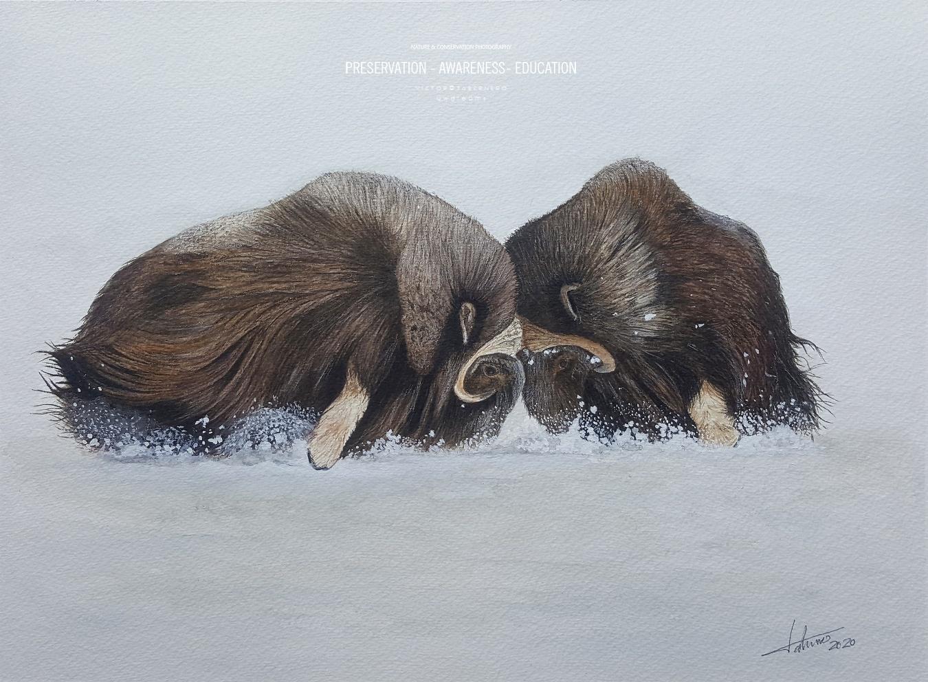 Luchas Prehistóricas 41x31cm - Vida Salvaje - Wildlife Conservation Photography, UWDREAMS.COM