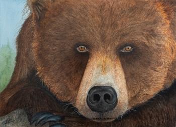 Grizzly - 41x31cm