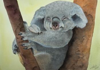 Koala - 31x23cm