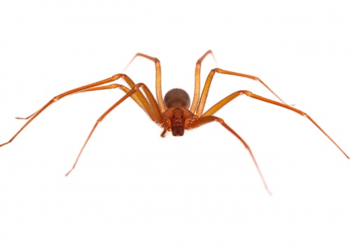 Aranyes i escorpins