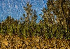 Oneiric iris. Montroig del Camp. Tarragona