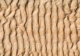 Ripple marks y huellas fósiles de aves. Peralta de la Sal