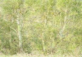 El rincón del aguilucho lagunero. Reserva de Sebes. Flix