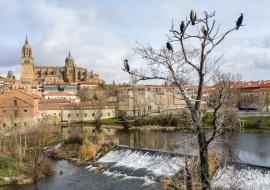 Cormoranes y catedral de Salamanca