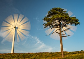Wind Turbine and pine tree