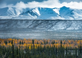 Taiga at Ogilvie River Valley. Yukon