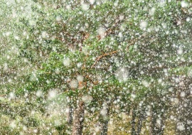 Snowing over the green