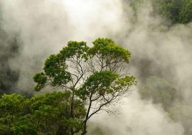 Volcanic gas. Lagoa das Furnas. Sao Miguel Island
