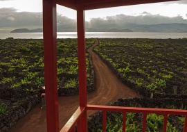 Vineyards. Areia Larga. Pico Island