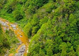 Selva atlántica. Isla de Sao Miguel